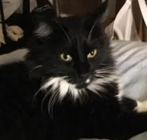 Floof Cat